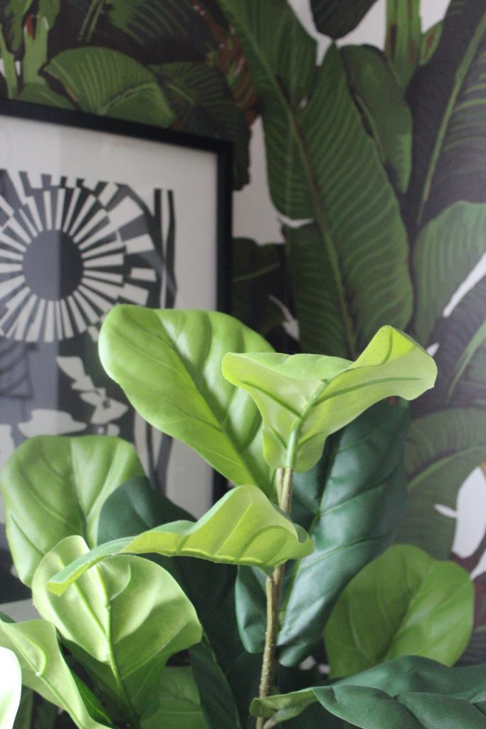 a fiddle leaf fig plant on a botanical wallpaper with a monochrome print in the background