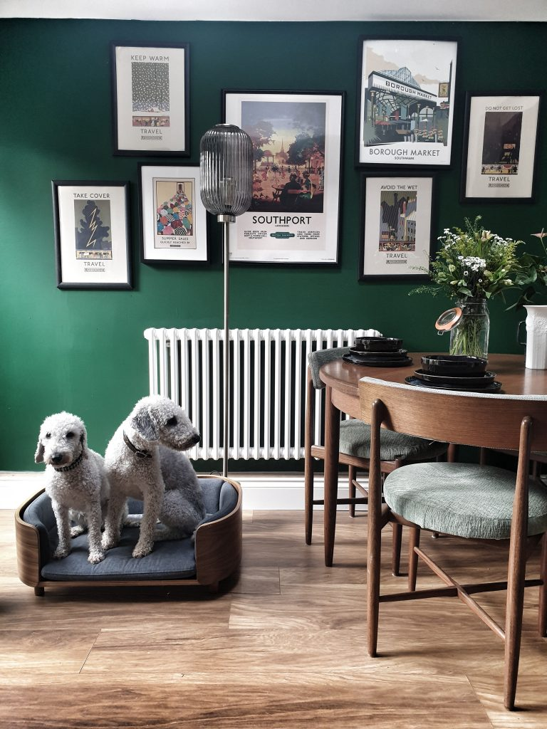 two grey sit in a mid century dog bed on a wooden floor with a lamp behind next to a teak table with flowers and blue table wear on it. a green wall behind with travel posters on