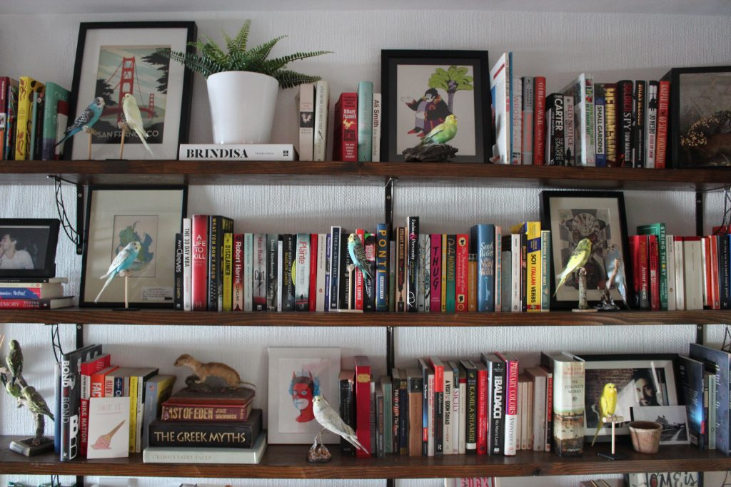 A Colourful home office with a bookshelf full of multi coloured books, art prints and taxidermy budgies